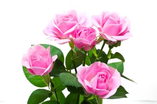 איך לבחור זר פרחים